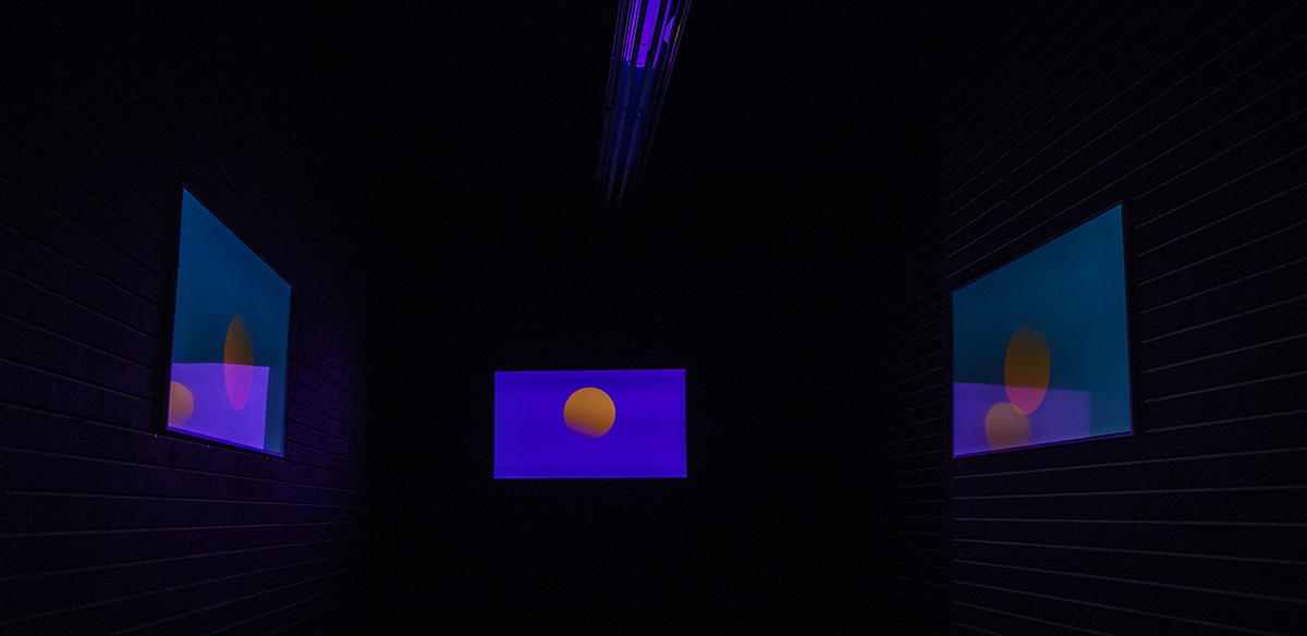 still showing installation view of codie on canal